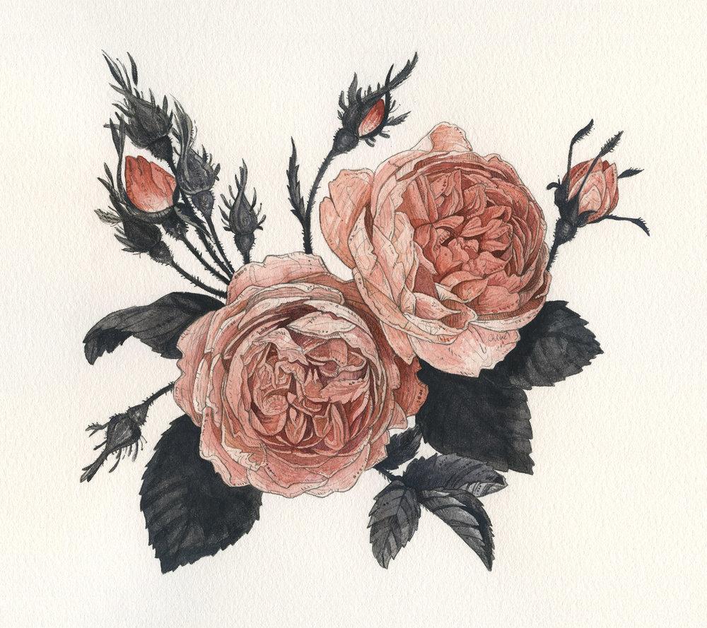 Maura Rose | Maura Rose Kampa Scholarship