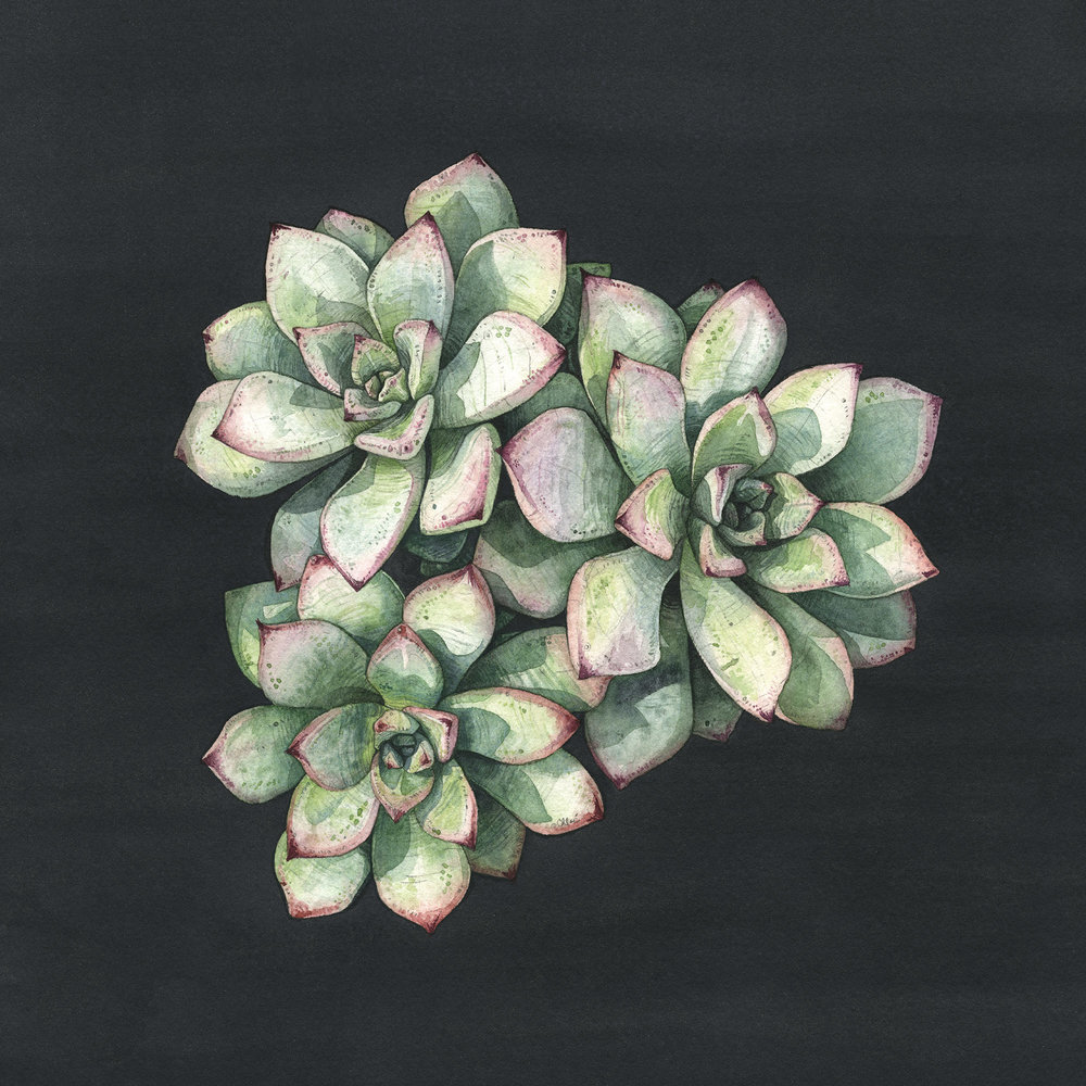 Echeveria | Art for the People Exhibition