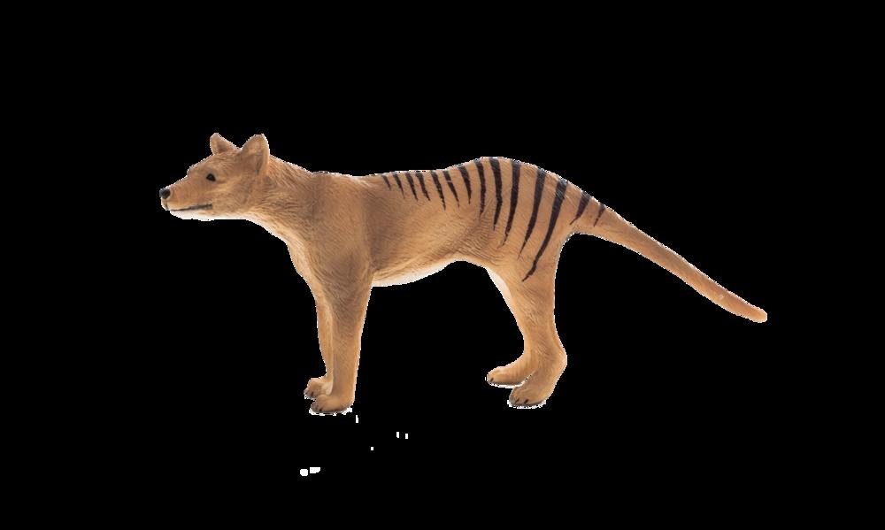 Mojö Thylacine