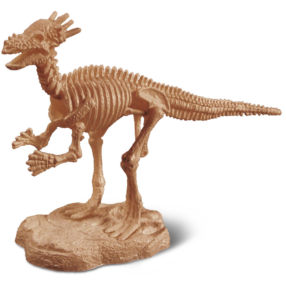 Keratocephalus - Wikipedia