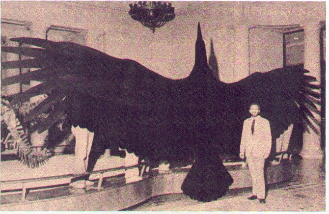 "In 1980 the bones of a bird with a wingspan of twenty-five feet were found in Central Argentina. It has been named the ""Magnificent Argentine Bird"" (Argentavis Magnificens). It is estimated to be about eight million years old. This species is the largest flying bird ever discovered.    Kenneth E. Campbell, (one of the discoverers), stands in front of a silhouette of the ""Magnificent Argentine Bird."" And yes, this is to scale. It is on display at the Natural History Museum in Los Angeles."
