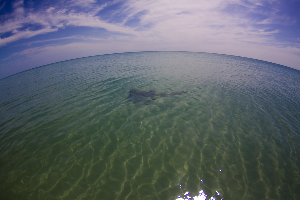 Even got to see a Nurse Shark without having to snorkel! It came swimming straight up to my feet, by the time I put the camera in the water she had turned to leave.. oh well. It was cool to see the sea life out and about in such prime conditions.