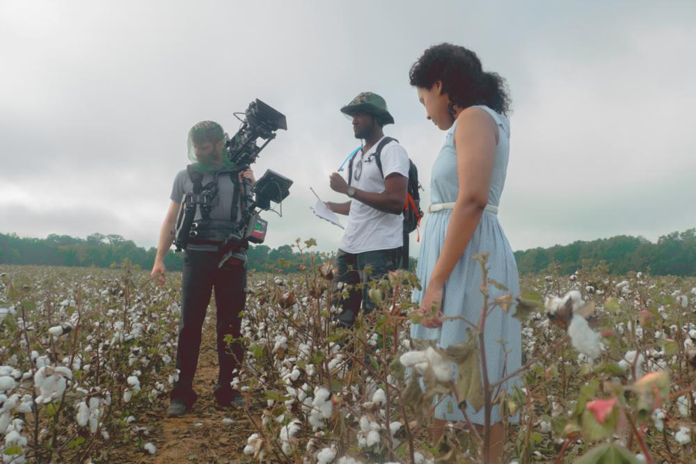 Nantze springs cotton field