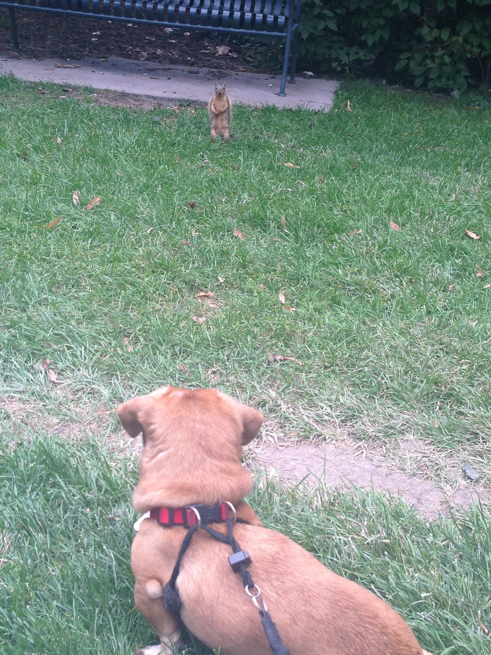 Squirrel standoff... Maynard, as always, remained King of the Hood.