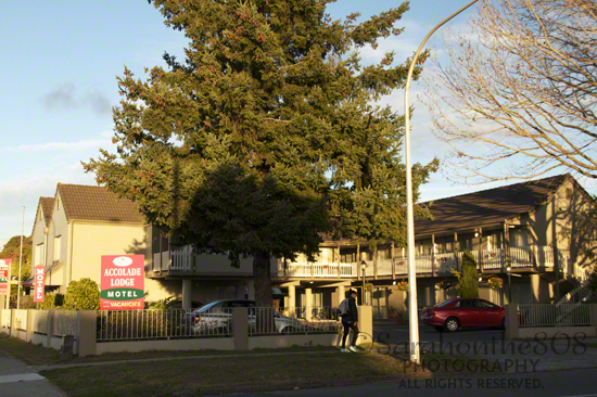 Cute 'n quaint Accolade Lodge Motel, my home for the next three nights in Rotorua on Victoria Street.
