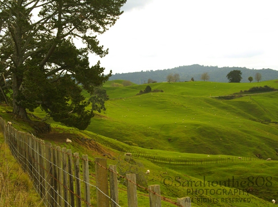 A parting shot from the area surrounding the Hobbiton Movie Set. Oh, here's another one—absolutely picturesque!