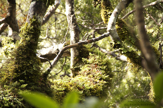 Foray into photography. The light falls just so onto the moss-covered branches, and it's challenging to capture. But I try.