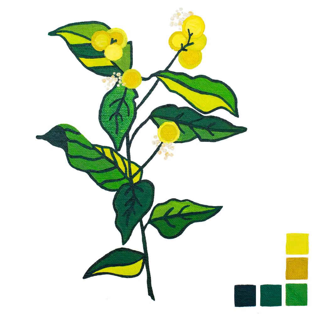 botanical-1.jpg