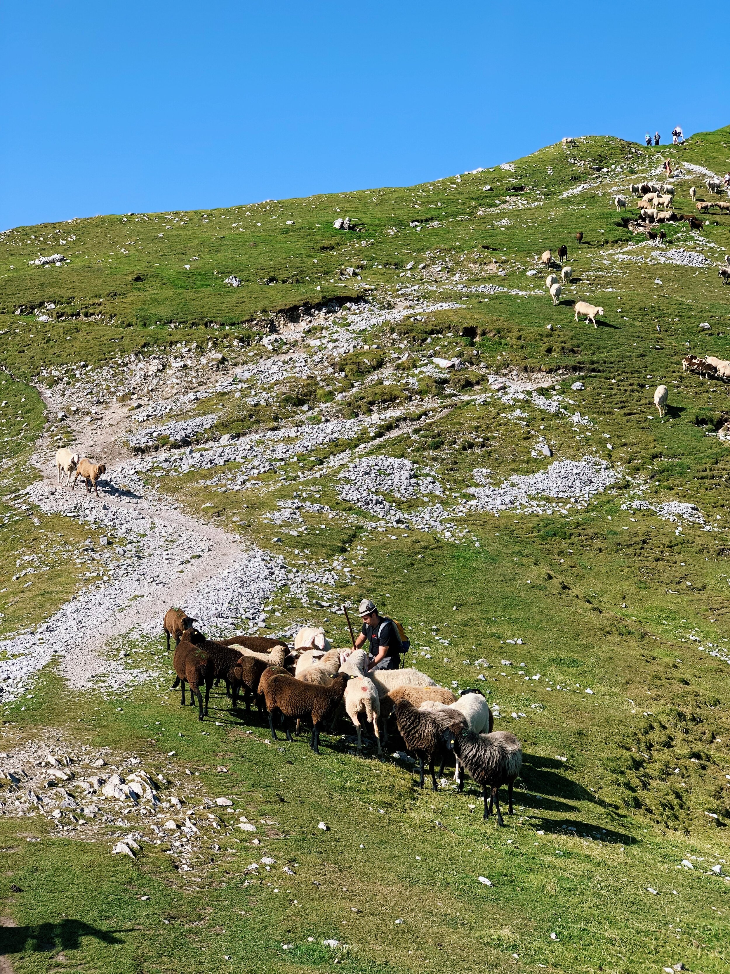 My favorite part of the hike was rounding the corner and seeing this shepherd round up his flock.