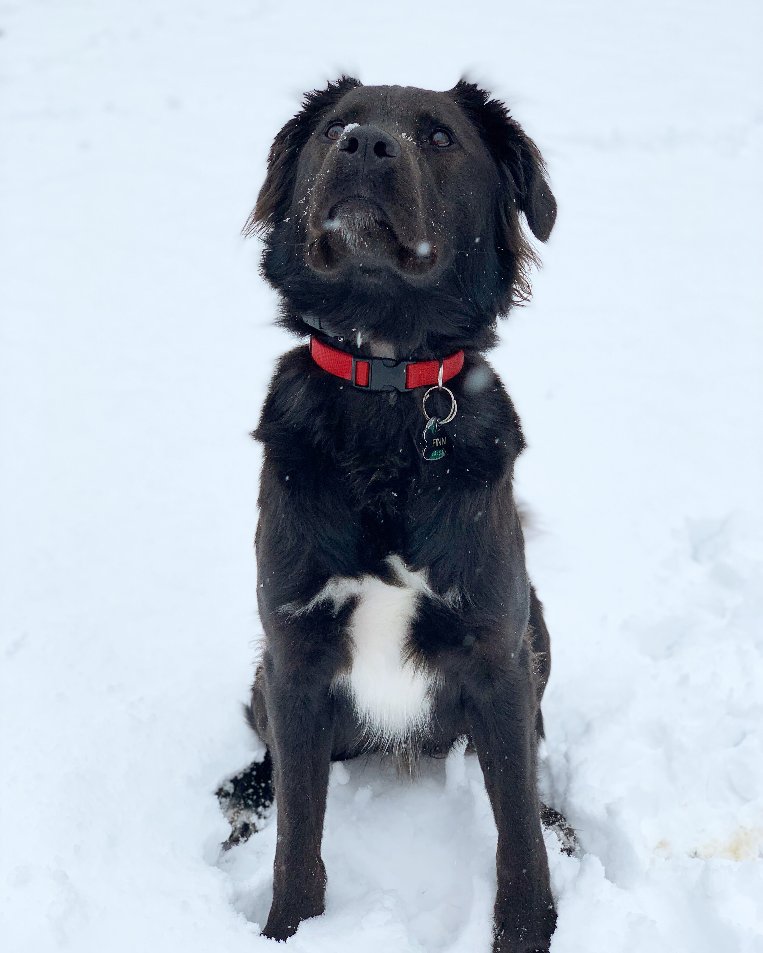 Enjoyed a few snow days with a VERY happy pup.
