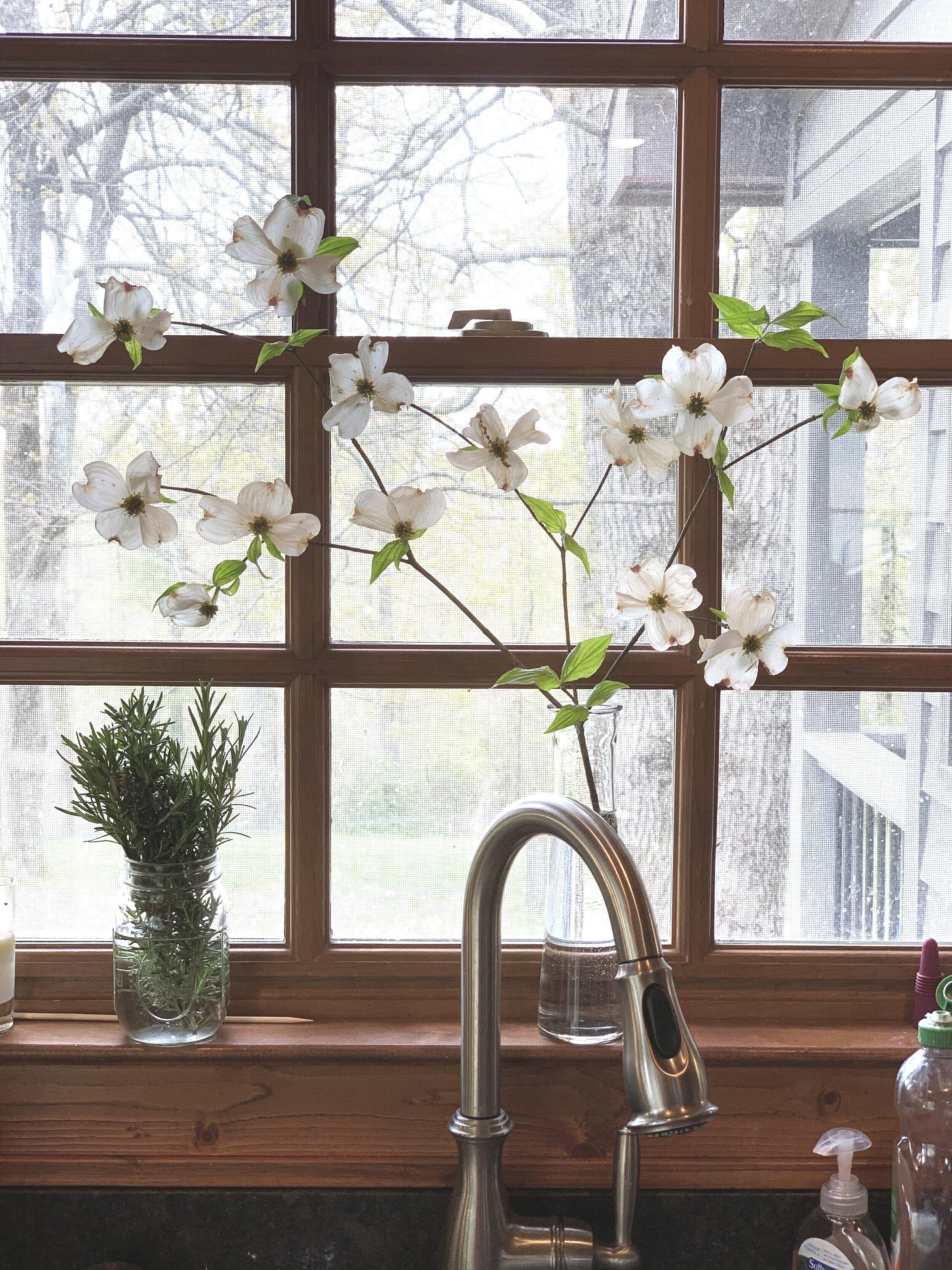 Dogwoods on the windowsill to welcome Springtime.