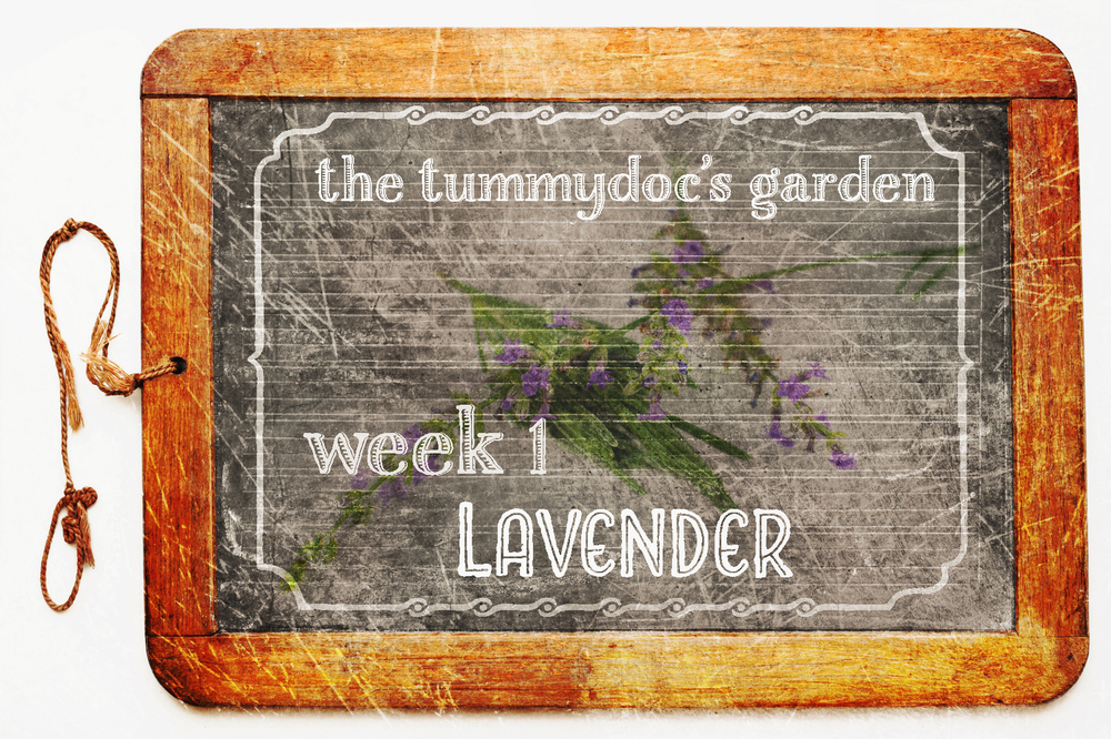 week 1 tummydoc garden take 2.jpg