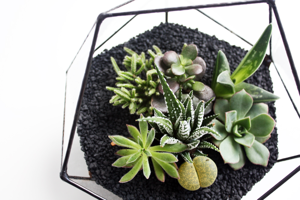 FACETED TERRARIUM _ 1.jpg