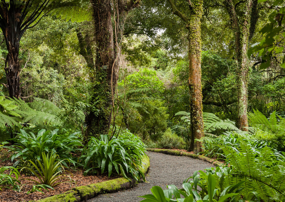 One of my favourite places - amidst the trees in the Otari Native Botanic Garden