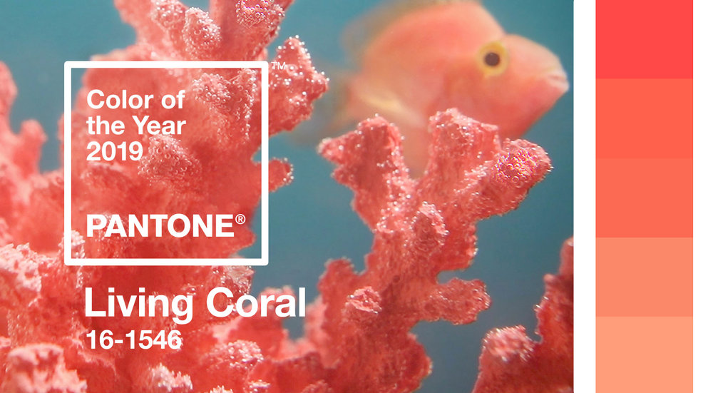 The many different shades of coral