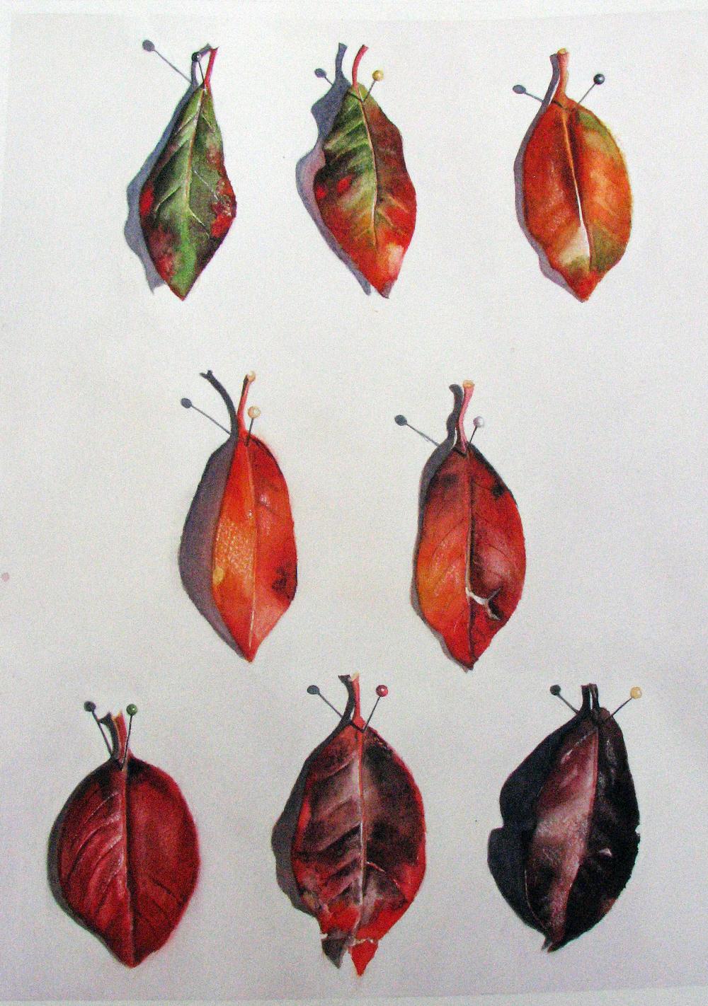 leaf trompIMG_0893.jpg