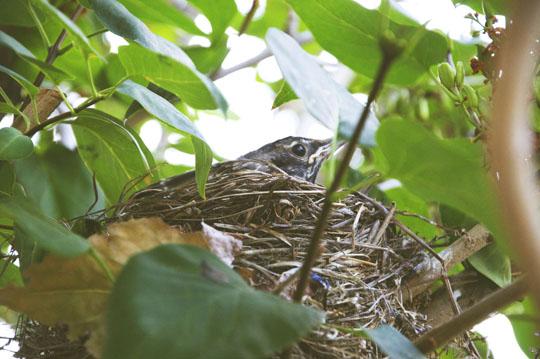 babybirds6.jpg