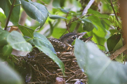 babybirds2.jpg