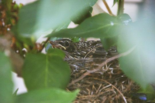 babybirds4.jpg