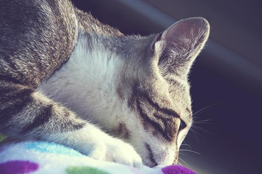 kitty3.jpg