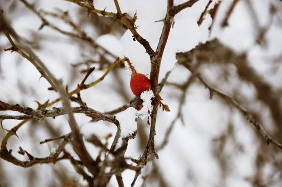 winterr6.jpg