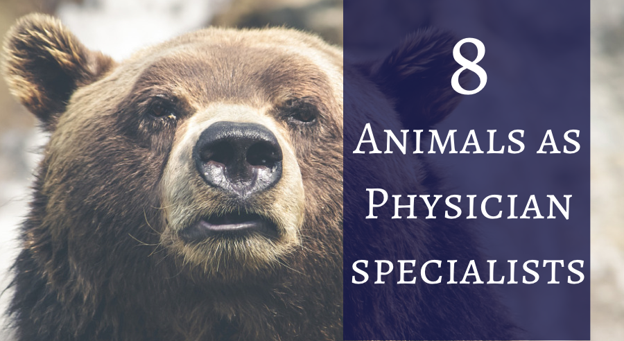 8 Animals as Physicians Specialists