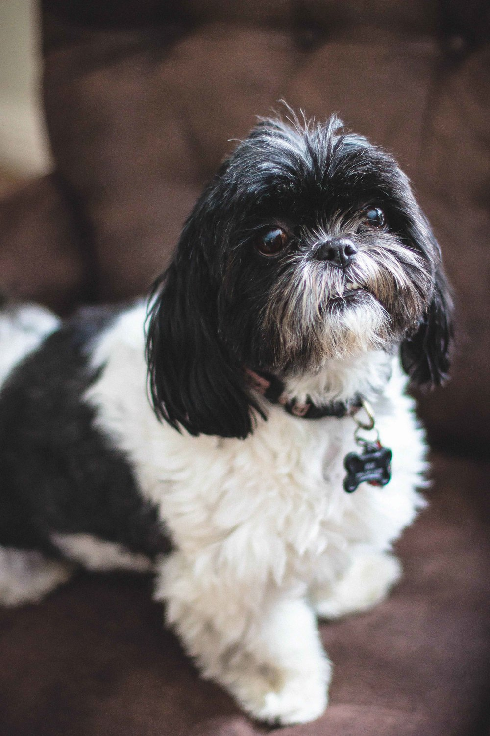 Emily Wilson Photography Elle the Shih Tzu's Business Headshots