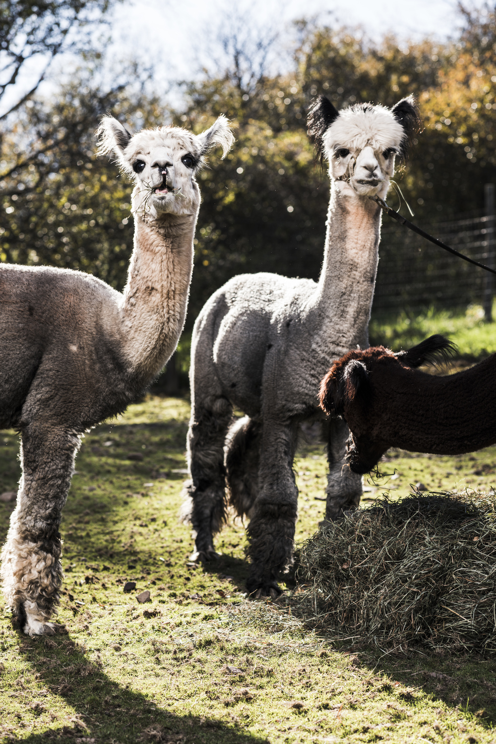 Imagine_Alpacas_eddie_adams_workshop_2015 (1 of 11).jpg