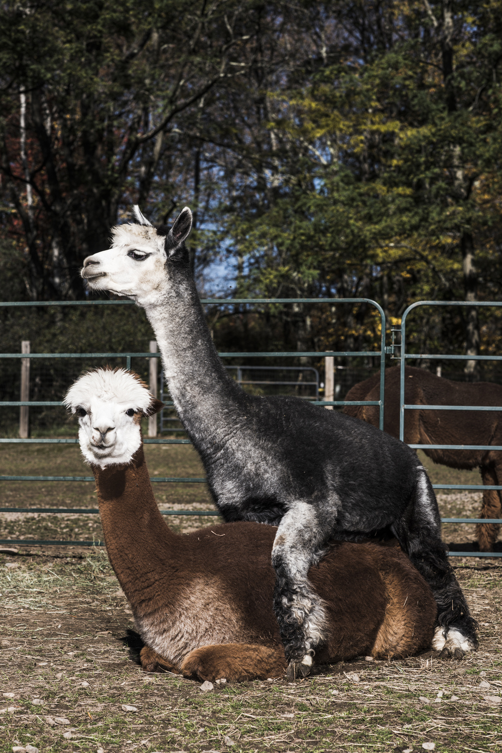 Imagine_Alpacas_eddie_adams_workshop_2015 (5 of 11).jpg