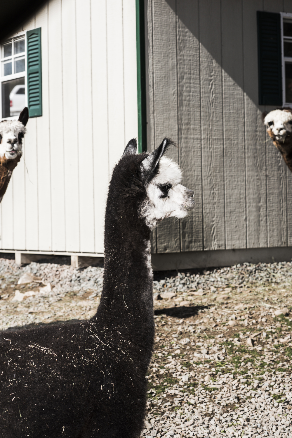Imagine_Alpacas_eddie_adams_workshop_2015 (7 of 11).jpg