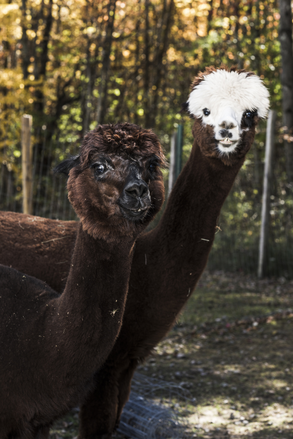 Imagine_Alpacas_eddie_adams_workshop_2015 (9 of 11).jpg