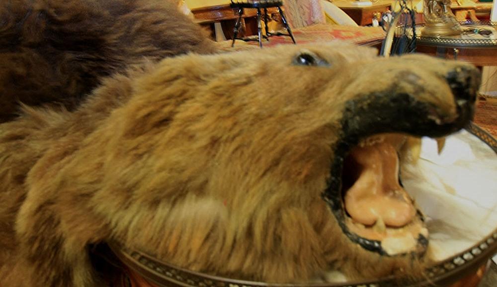Hiden Galleries: brown bearskin rug