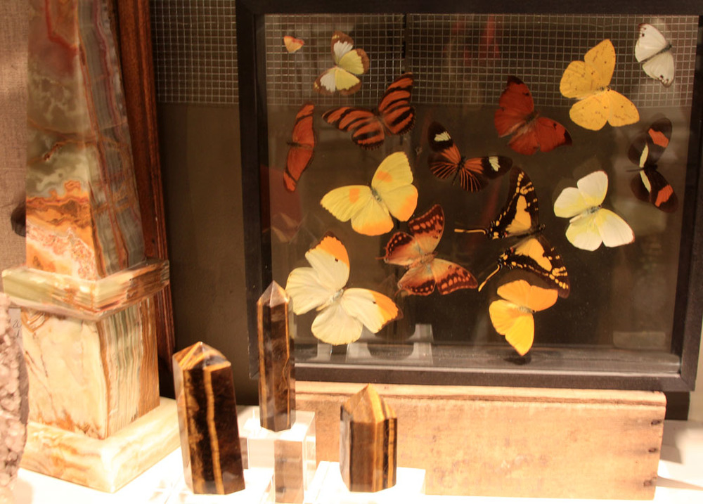Hiden Galleries: framed mounted butterflies
