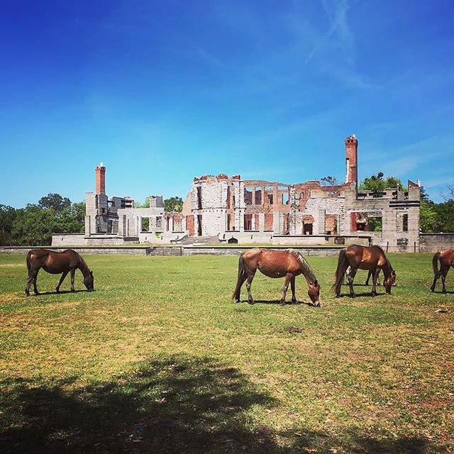 Wild horses at ruins of Dungeness, a former Carnegie family home, Cumberland Island, Georgia  Repost @meninamom #weclosemay31 #hidengalleries #vintage #furnishings #antiques #cumberlandislandnationalseashore #dungeness #wildhorses ・・