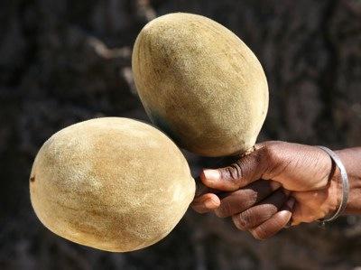 BaobabFruit2.jpg