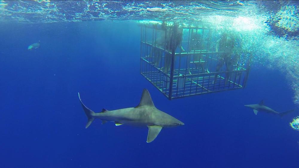 Shark Cage Dive 7 RGB.jpg