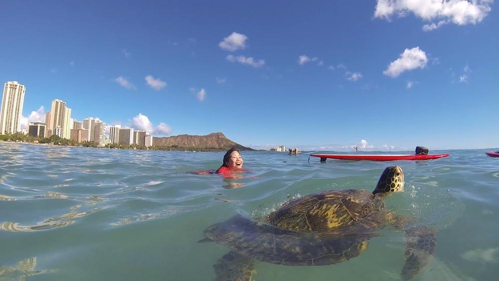 waikiki turtle 03.jpg