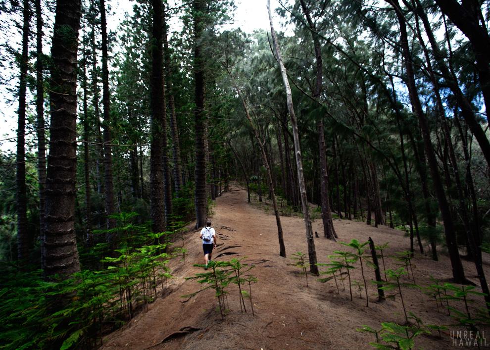 Kuliouou Ridge Trail 4.jpg