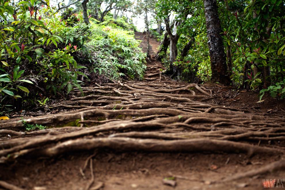 Kuliouou Ridge Trail 6.jpg
