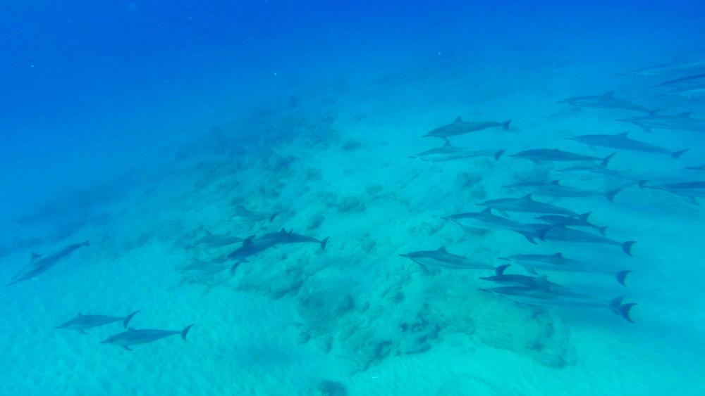 Dolphin 5-10-15.Still024.jpg