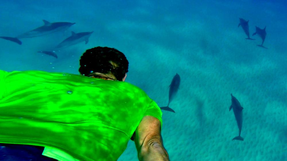 Dolphin 5-10-15.Still040.jpg