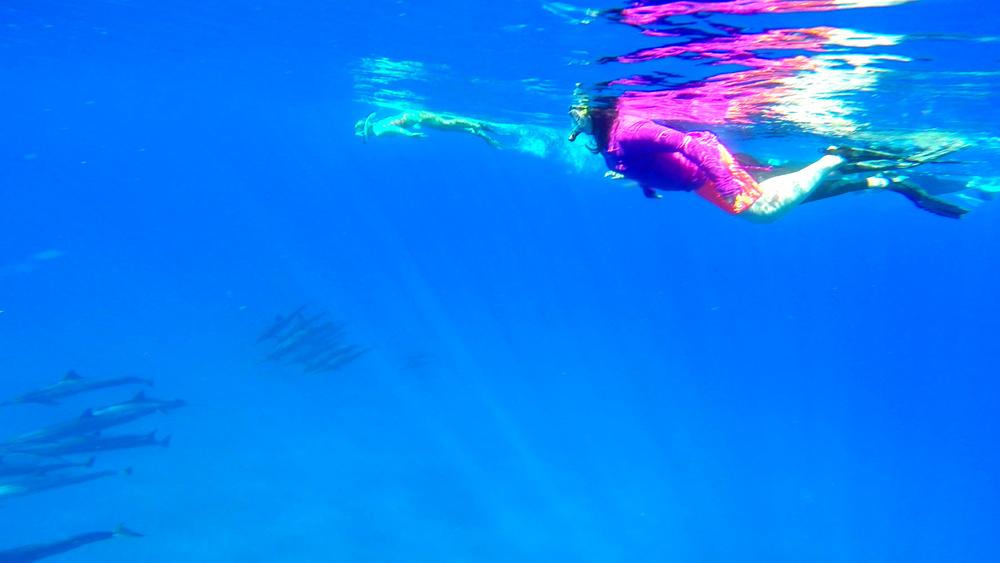 Jennifer & Elise Dolphin & Turtle 6-15-15.Still004.jpg