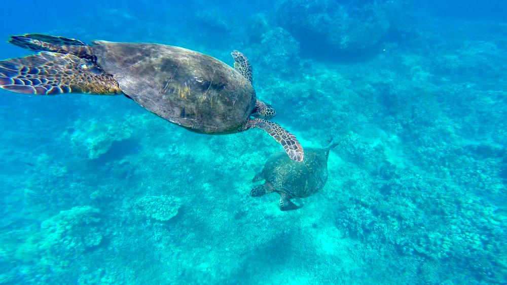 Jennifer & Elise Dolphin & Turtle 6-15-15.Still070.jpg
