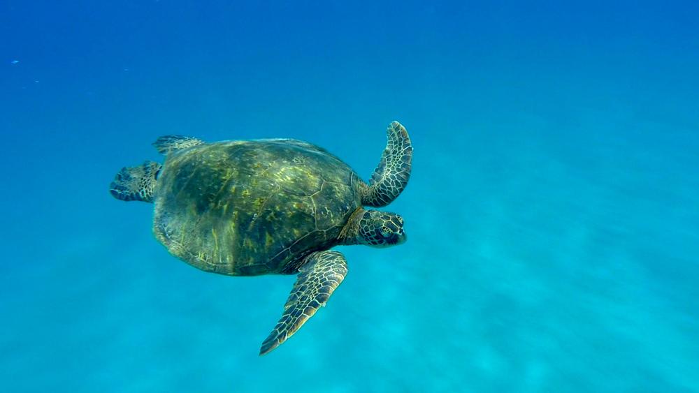 Jennifer & Elise Dolphin & Turtle 6-15-15.Still088.jpg