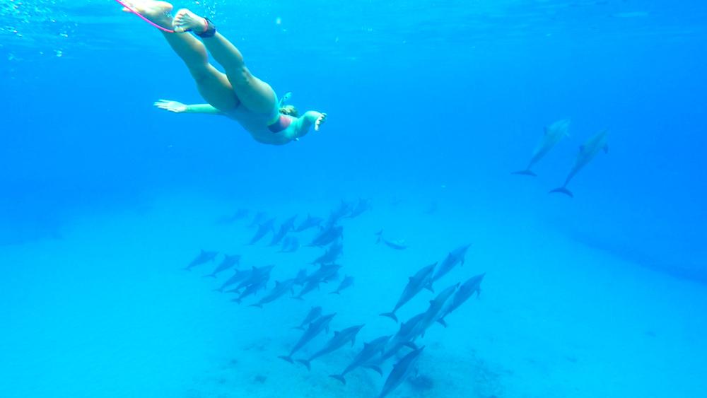 Dolphin 5-10-15.Still012.jpg