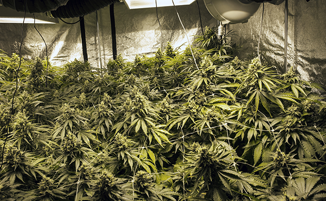 LilleJohns Plantasje02.jpg