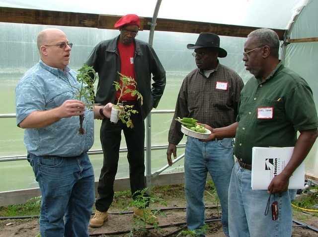 Dr. Joe Kemble teaching beginning farmers about tomato diseases during a recent SSAWG field training.