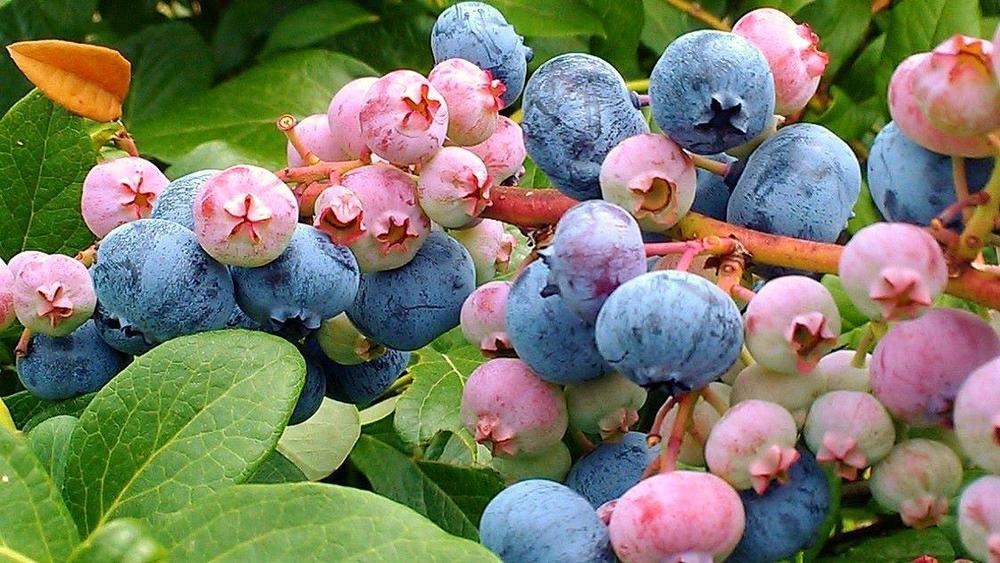Mini Course #2: Adding Fruit to Your Southern Market Farm