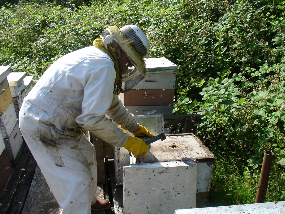 Mini Course #3: Getting Started in Natural Beekeeping