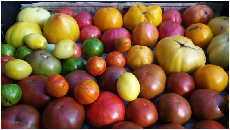 henkles tomatoes.jpg
